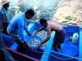 2015-02-24-Inde du sud-0370-HDm