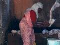 2015-02-25-Inde du sud-0737-HDm