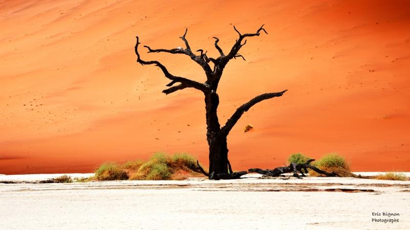 WEB-2019-11-17-Namibie-1116-MDPS