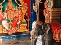 2015-03-03-Inde du sud-2719-MD